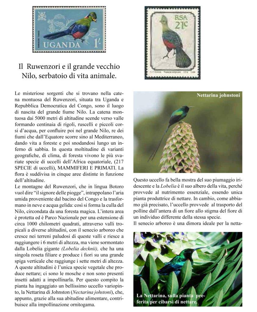 Notiziario1 A.I.F.A