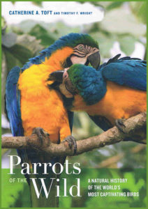 Parrots-on-the-wild-1
