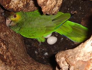 . Interno del tronco con una femmina in cova.